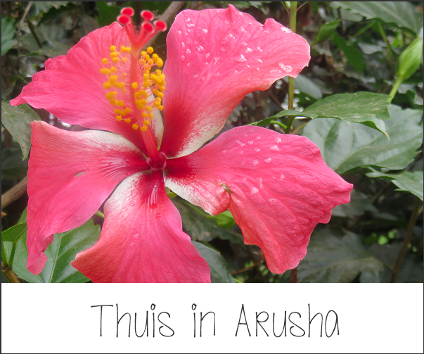 Thuis in Arusha